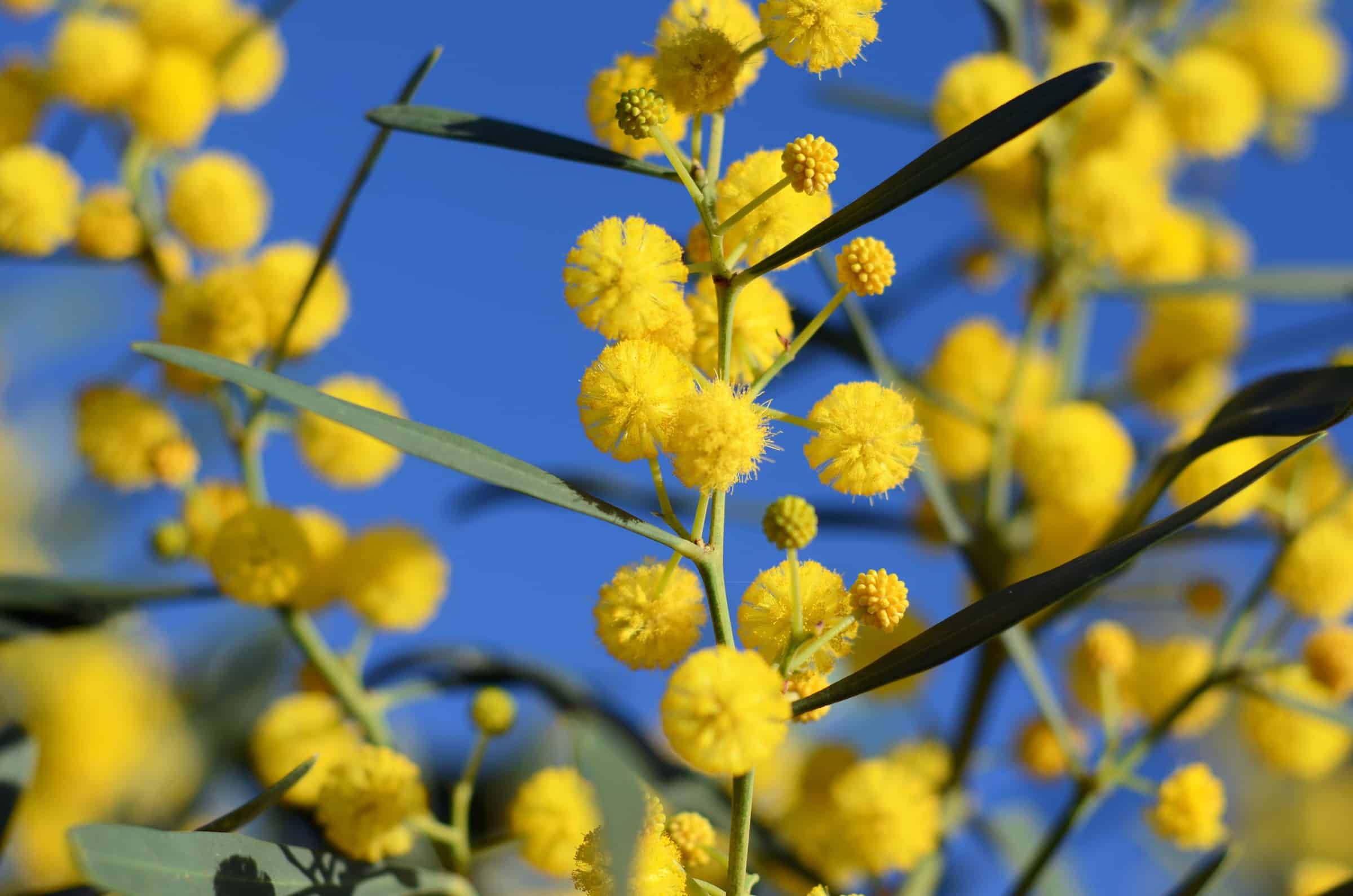 1. Watch the pollen forecast to minimise Hayfever symptoms.